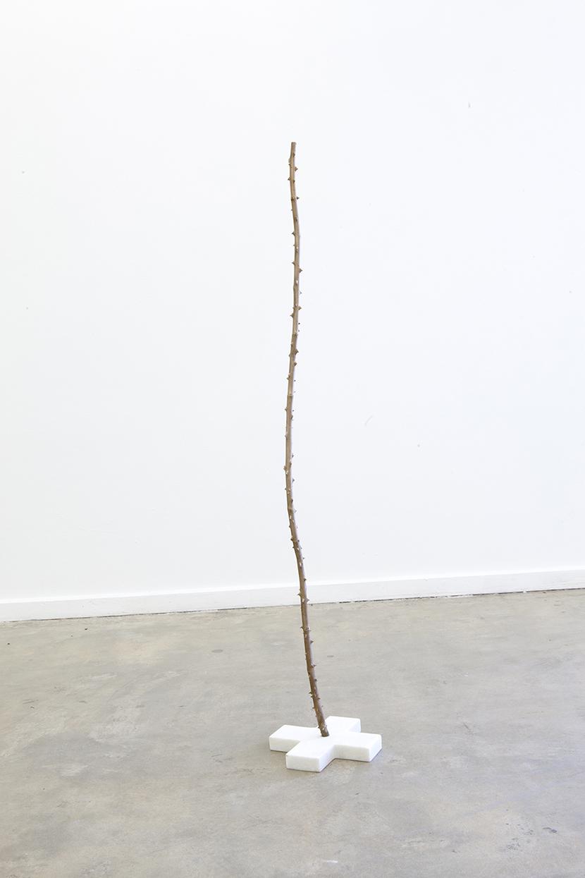 Long thorn